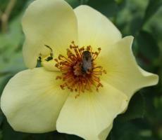 Frühlingsgold